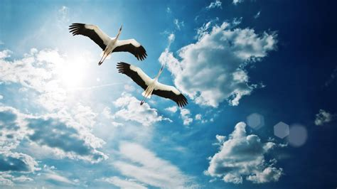 Home Birds Flying Sky Nature Full Hd Wallpaper   Litle Pups