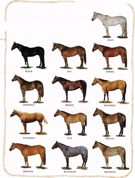 color of horses learning about horses basic colors