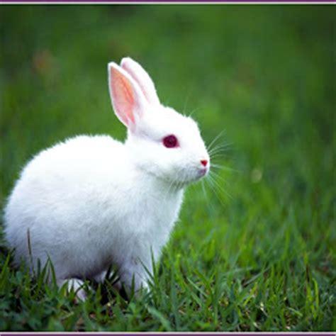 wallpaper kelinci lucu  imut gambar keren  unik