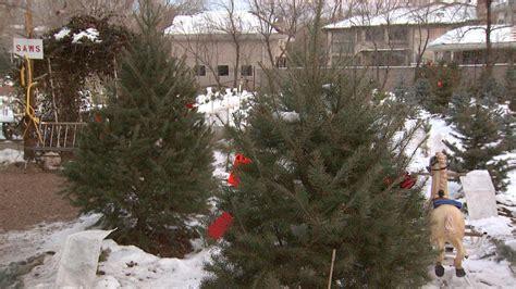 best 28 christmas tree farms near denver cut down your