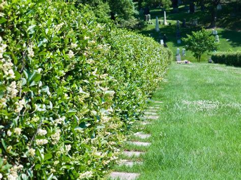 Nat Rlicher Sichtschutz F R Den Garten 2037 by Schnellwachsende Immergr 252 Ne Hecke Immergr Ner Sichtschutz