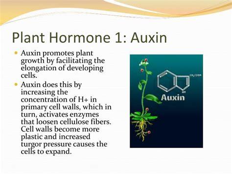 Hormon Auxin ppt plant hormones and plant reproduction powerpoint presentation id 7041270