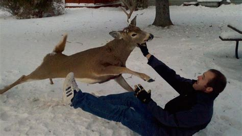 deer attacks why we shoot deer in the a story from an educated farmer