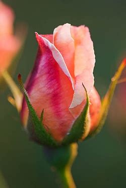 tattoo pictures rose buds 17 best ideas about rose bud tattoo on pinterest rose