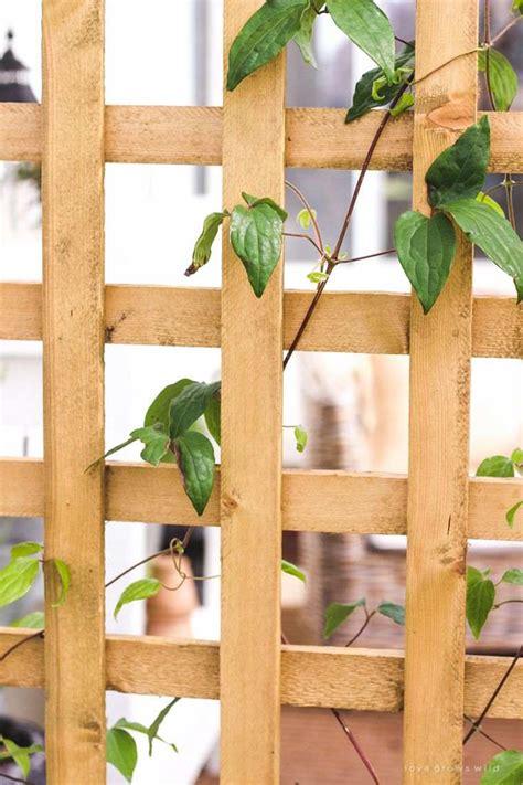 treillis en bois jardini 232 re avec treillis ext 233 rieure 224 r 233 aliser soi m 234 me