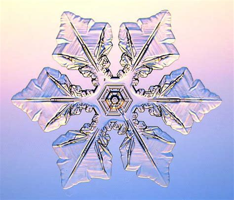 snowflake patterns real real snowflake pictures real snowflakes snowflakes