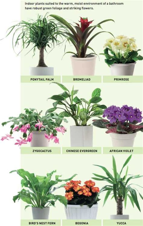 indoor plants bathroom bathroom plants reader s digest australia gardens pinterest bathroom plants
