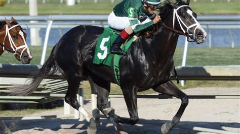 brisnet recent and upcoming racesall sires pletcher sends out battalion runner in eight horse wood
