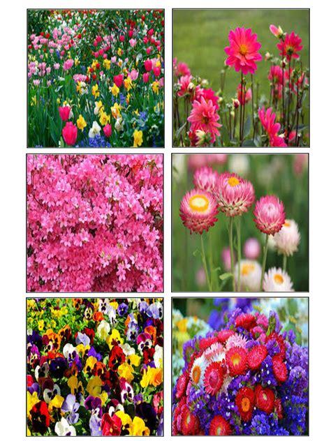 giochi dei fiori passatempi memory dei fiori