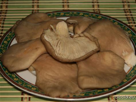cucinare funghi coltivati funghi pleurotus puliti tipi casa