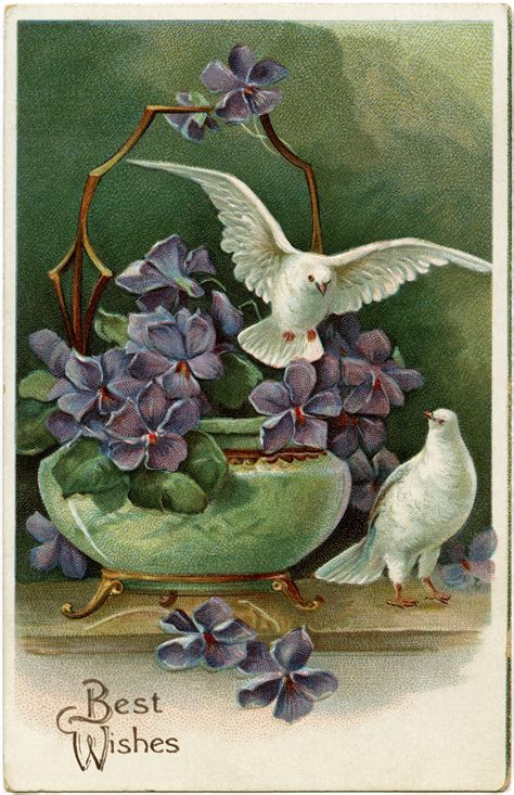 old vintage images purple flowers and doves free vintage postcard image