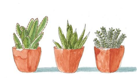 piante da terrazzo resistenti al freddo piante da balcone resistenti al freddo e al caldo casafacile