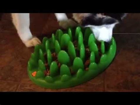 maui testing  green dog bowl food puzzle youtube