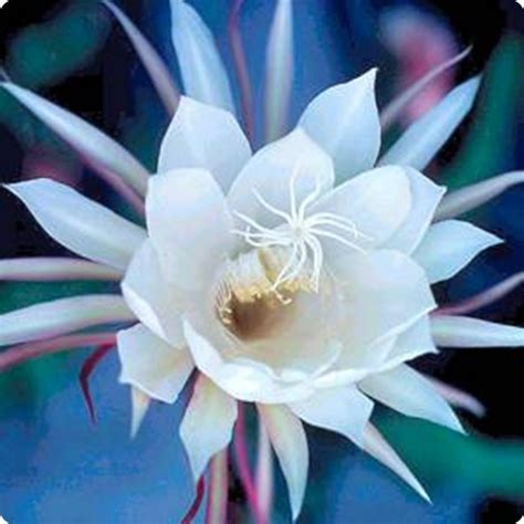 fiori belli di notte la della notte quindi i fiori seguono l orologio