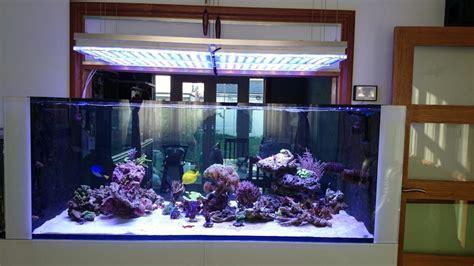Lu Led Aquarium 2015 new reef tank build uk using atlantik led light orphek
