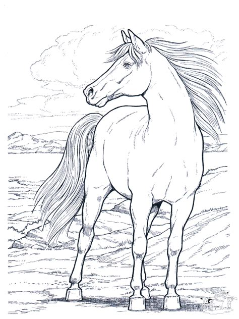 picture of a horse coloring page free printable horse coloring pages for kids