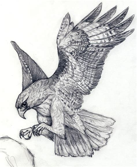 hawk tattoo pinterest 369 best hawk tattoo ideas images on pinterest hawk