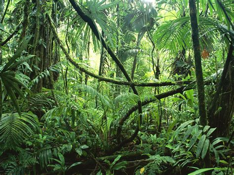 tropical forest plants tropical rainforest costa rica plants in nanopics