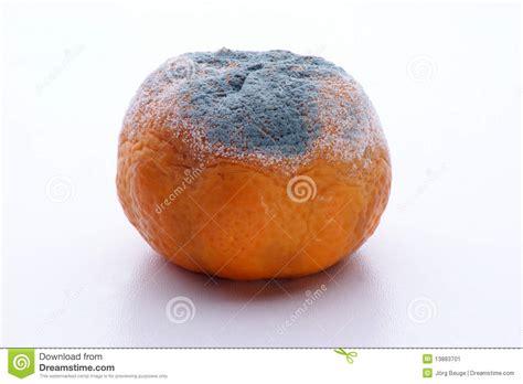 fruit unhealthy mandarin mouldy fruit unhealthy to eat stock image image