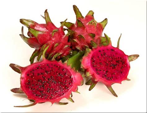 Sale Buah Naga Merah buah naga hylocereus undatus haw britt et r buahbuahku