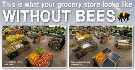 Do You Grocery Shop With Or Without A List by Earthmanpdx Grocery Stores Without Bees