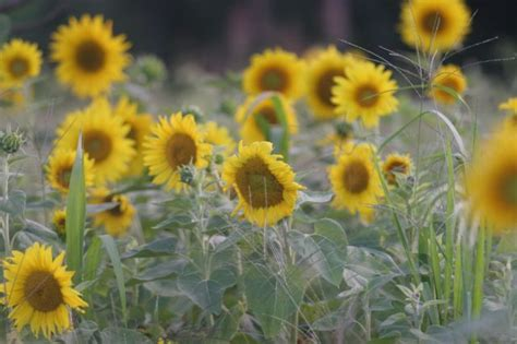 eating sunflowers images