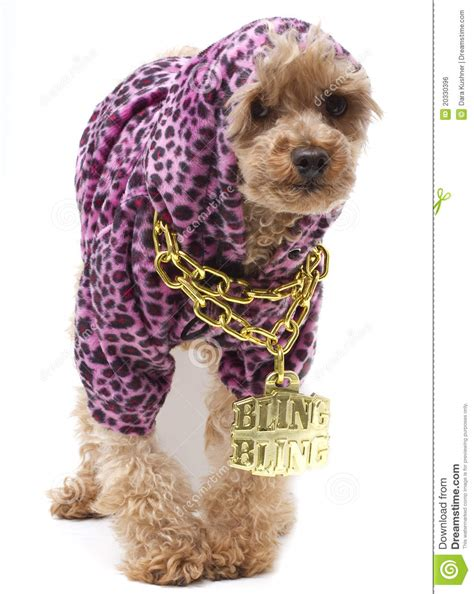 puppy hop hip hop royalty free stock image image 20330396
