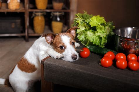 what foods are toxic to dogs no for fido foods toxic to dogs essential probioticsessential probiotics