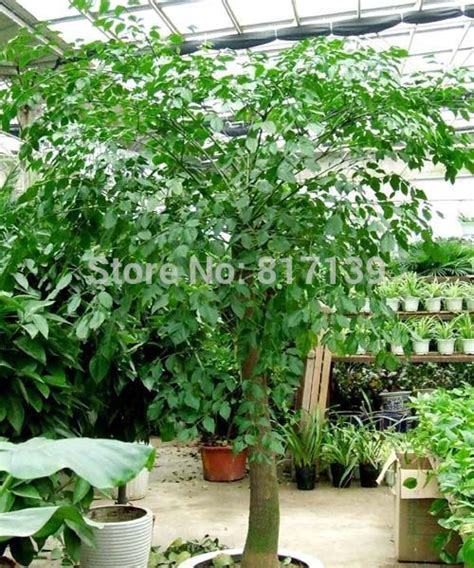china doll prices compare prices on china doll tree shopping buy low