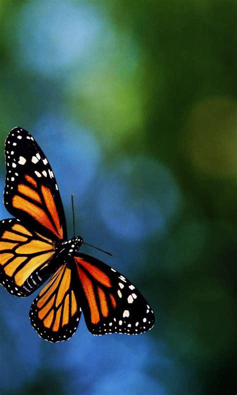 imagenes mariposas whatsapp fondos para whatsapp patada de caballo mariposas