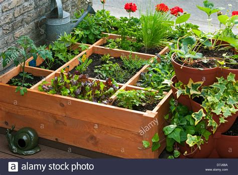 Square Foot Gardening Flowers Square Foot Gardening By Planting Flowers Herbs And Vegetables In Stock Photo Royalty Free