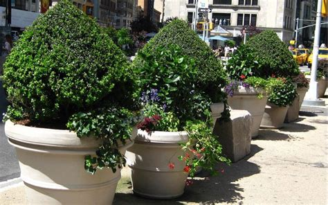 large commercial planters how to maintain large commercial plantersterracast products