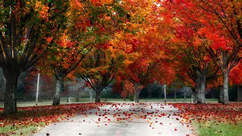 wallpaper hd 1920x1080 autumn fall trees wallpaper 183
