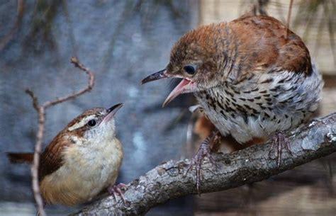 pictures of birds in alabama alabama wildlife center releases orphaned birds al