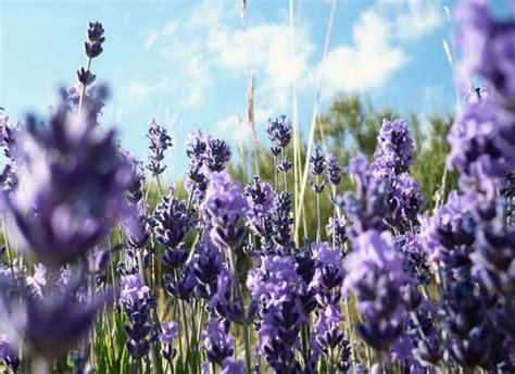 fiori resistono al sole quali sono i fiori resistono al sole foto pollicegreen