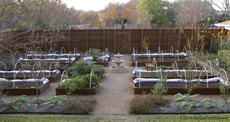dallas fruit and vegetable grower vegetable gardens