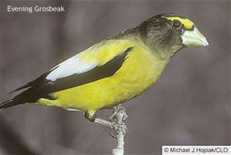 all about birds irruption year