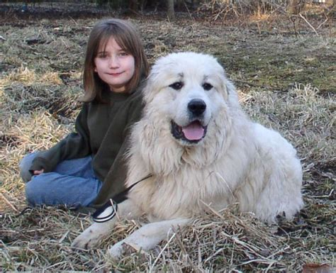 great pyrenees colors about gp
