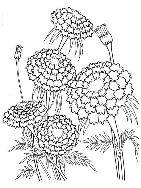 marigold flower coloring pages download and print