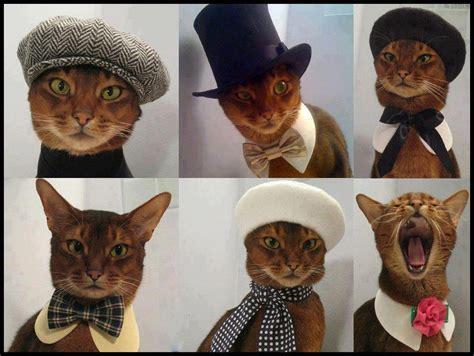 Cat Wardrobe by Nuevo Post Gt Gatitos Disfrazados Http Www