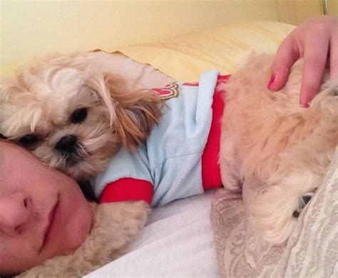 shih tzu where are they from 14 signs you are a shih tzu person