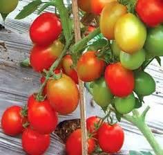 Benih Wortel Unggul lmga agro jual produk pertanian harga murah dan