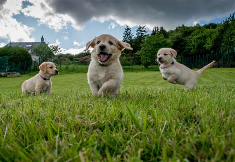 socializing a puppy planet socializing your new puppy