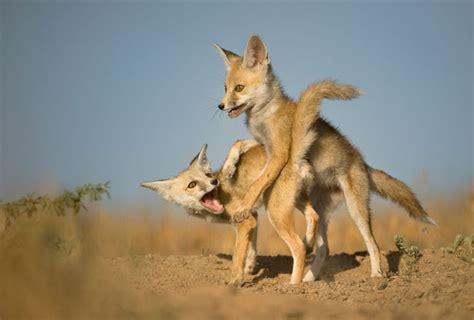 Simplify Your Home photo gallery of kutch desert wildlife sanctuary explore