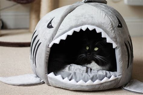 shark cat bed cookie his new shark bed cityscape bliss