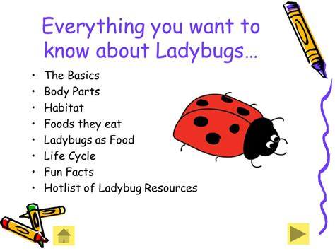 ppt the life cycle of ladybugs powerpoint presentation facts an informational powerpoint for elementary students