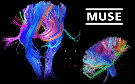 Muse Themes Video Background | muse desktop wallpaper