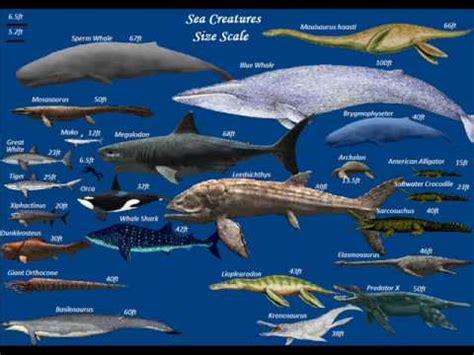 blue whale vs whale shark megalodon shark vs blue whale
