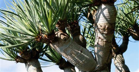 plants     miniature palm tree ehow uk