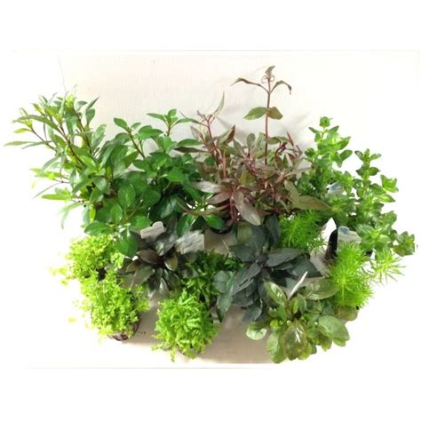 aquascape plants dutch aquascaping plant collection for tanks up to 36